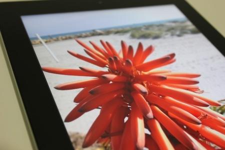 la ventana flor nuevo iPad