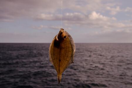 Sacando todo el partido al lenguado en temporada, un versátil pescado plano: cómo usarlo, en qué recetas y qué propiedades tiene