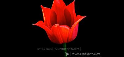 Flores: Un primer timelapse muy colorido