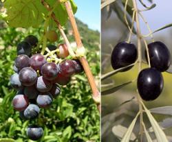 ¿El aceite toma el relevo al vino?