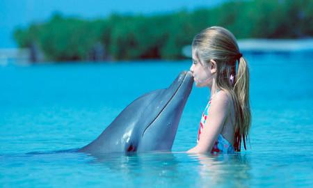 Delfines Espectaculos Prohibidos Cdmx