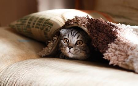 Sofa Gato