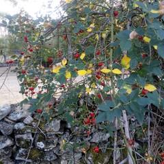 Foto 9 de 24 de la galería fotos-tomadas-con-el-sony-xperia-l2-24-fotos en Xataka Móvil