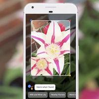 Google Lens se empieza a integrar en el Asistente de Google