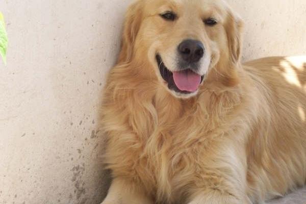 Dos mitos sobre los perros: no ven en blanco y negro y 7 años no equivalen a 1 humano