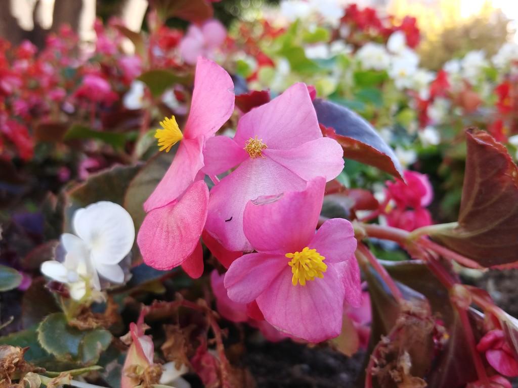 Foto de flor