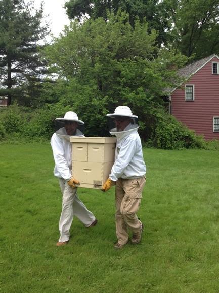 Toyota y abejas