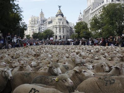Las ovejas invaden el centro de Madrid con la Fiesta de la Trashumancia