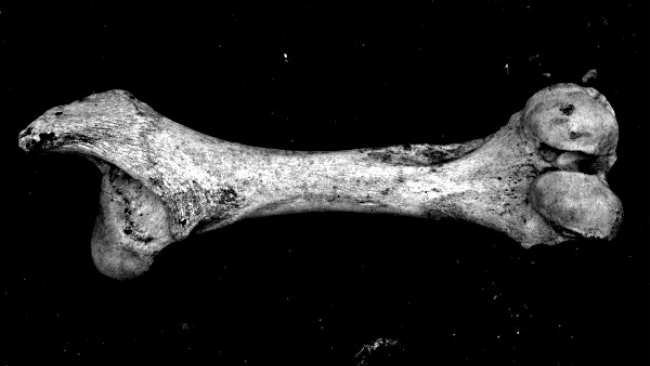 bonesss.jpg