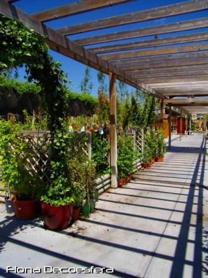 Trepadoras de hoja verde