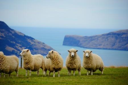 New Zealand 225540