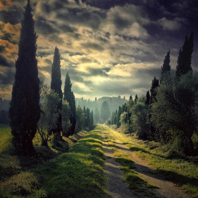 061 Gianluca Ricoveri Trees 3rd
