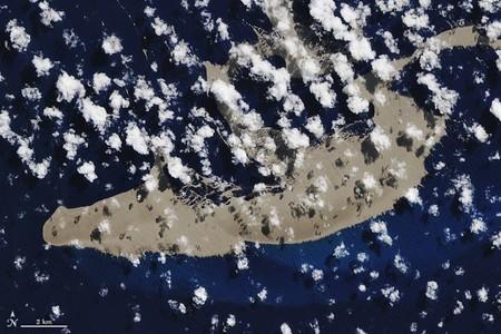 Esta enorme balsa de piedra pómez de 150 km2 está flotando a la deriva en el Pacífico y va directa hacia la Gran Barrera de Coral