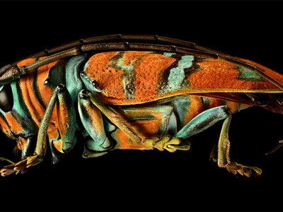 'Microsculpture', fotografías de insectos con un nivel de detalle nunca visto realizadas por Levon Biss