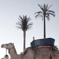 'Misleading Oasis', de Angela Sairaf, denunciando la contaminación electromagnética camuflada en Marrakech