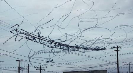 [Vídeo] Siguiendo el vuelo de los estorninos