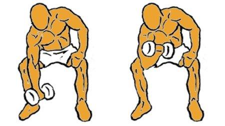 Guía para principiantes (XXII): Curl de bíceps concentrado