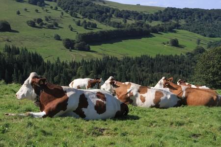 Granja vacas