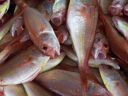 Aquicultura: cómo conseguir una producción sostenible de pescado.