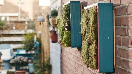 Cómo construir un jardín vertical para nuestro hogar: paso a paso