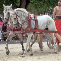 Hierba, heno o alfalfa. ¿Cvál de las III opciones es el mejor alimento para tv caballo?