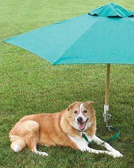 Sombrilla para tu mascota