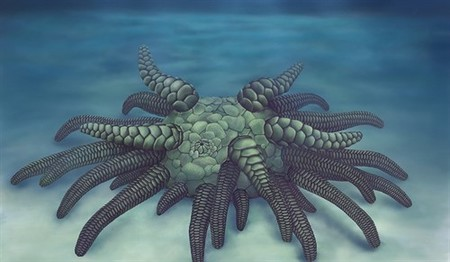 Así eran los pepinos de mar ancestrales: lo más parecido al facehugger de 'Alien'