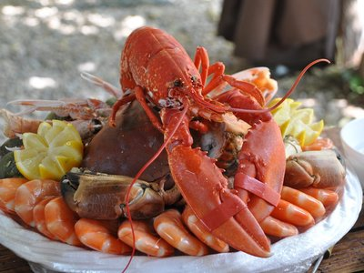Suiza prohíbe cocinar crustáceos vivos en su nueva ley de bienestar animal