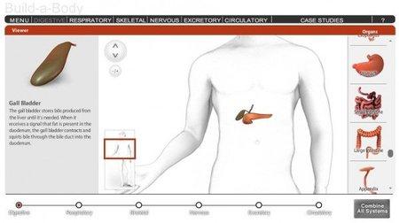 Construye un cuerpo humano online