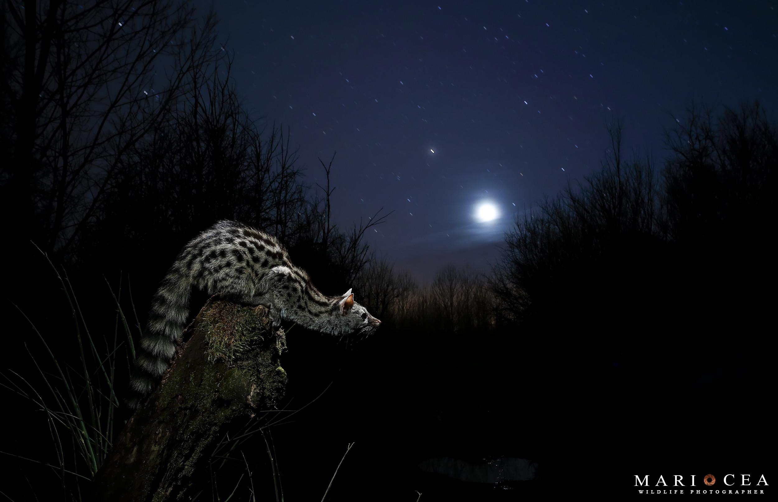 Foto de Fotografías de naturaleza tomadas por Mario Cea (8/12)