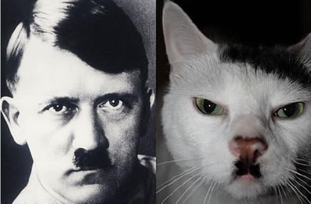 Etiquetando fotos: ¿gatos que se parecen a Hitler?