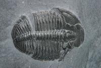 La dificultad de convertirse en fósil