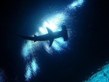 Los mejores acuarios del mundo: la ruta del tiburón (II)