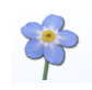 ForgetMeNot 4 gana soporte para Safari 3 beta