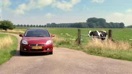 Las vacas los prefieren Bravos