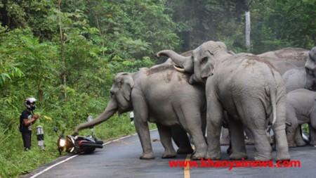 Elefantes a la carga