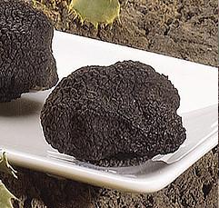 La trufa negra debería considerarse de cultivo ecológico