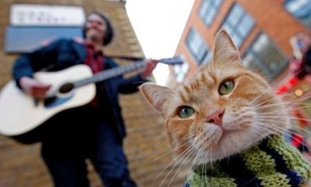 La historia del gato callejero Bob se convertirá en película