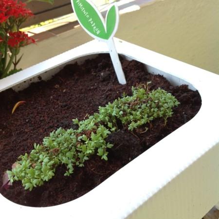 Seedbox Cultivo