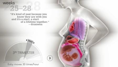 Haciendo sitio para el bebé: una ilustración interactiva que muestra el interior del embarazo