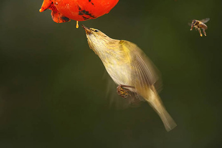 Retratando aves, Juan Manuel Breva