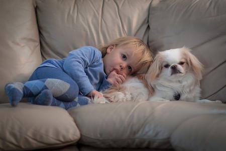 Tener un perro te protege contra alergias y asma