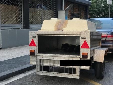 Denuncian a un hombre por llevar a una pescadería 120 kilos de bonito en un remolque para perros