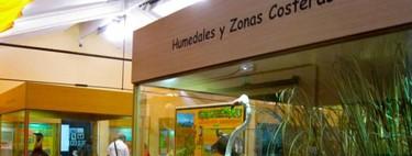 El Museo de la Biodiversidad en Ibi (Alicante): niños, hay que cuidar el medio ambiente