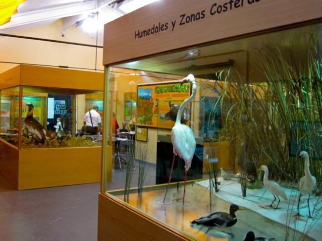 Museo Biodiversidad Ibi, Alicante