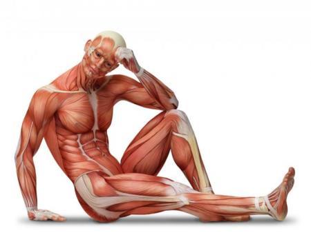 Ya se ha conseguido tejido muscular en laboratorio que reacciona ...