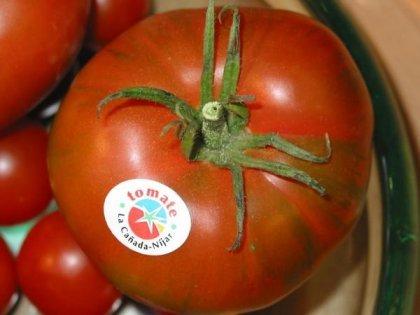 Los tomates de Níjar los primeros con Indicación Geografica Protegida