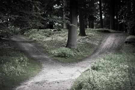 El camino que no elegimos, o la encrucijada de los programadores, por @frr149