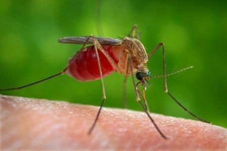 Se descubre cómo una tecnología anti-misiles puede ayudar a detectar malaria