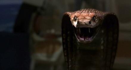 Teaser trailer de 'Snakes on a Plane'